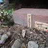 ピーコちゃんのお墓👼🕊️