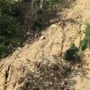 なぜネパールの農業は儲からないのか