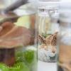 植物園のきのこに会いに行く(国立科学博物館筑波実験植物園レポート)☆きのこ観察に出かけよう☆