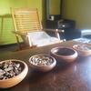 【コロンボ市内観光1】アーユルヴェーダを体験!コロンボ市内の素敵な安宿