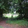 イギリス・フラワーエッセンスの旅~エドワード・バックのお墓を訪ねる~