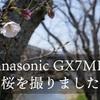 Panasonic GX7MK2 カメラ初心者が構図を気にしながら桜を撮ってみた。