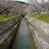 琵琶湖疏水、三井寺、そして京都府庁旧本館の桜
