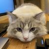 Firebaseで作る!リアルタイム画像変換CDN【Firebase Hosting + Cloud Functions】