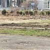 5月4日は「みどりの日」 ~自宅で緑を楽しみ、鹿が現れた!