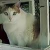 猫の年齢の見方と換算表!寿命は伸びている?