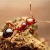 フィリピンの住宅は虫との戦い  アリ編