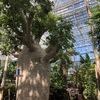 広島のオアシス。広島市植物公園の魅力を紹介します。植物に詳しくなくても楽しめるスポットです。