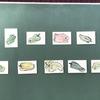 認知症予防サークルわっこで臨床美術「ピーマンの線描画」を実施しました