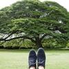 旅行にオススメの靴:COLE HAAN(コール ハーン) ゼログランド でハワイ!
