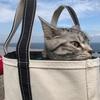 ジルとお散歩。海を見に行く。コストコで買い物♪