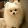 中国では道端で子犬を売ってた かわいい子犬の販売に許可は必要なの?