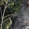 生態系を破壊する?近所の公園で外来リスを目撃。