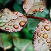 【もうすぐ梅雨】オススメ雨具のレインシューズ【災害やゲリラ豪雨対策にも】