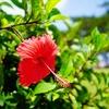 沖縄離島1泊2日3万円で高級リゾートホテルに泊まれるプラン(航空券+宿泊)を作ってみた。