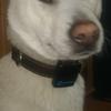 Tractive 3G 犬用GPSトラッカー再び
