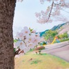 そして葉桜に