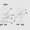 骨学(上肢の関節)
