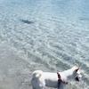 犬がサメに狙われた!!