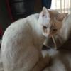 野良猫の保護で、母猫の行動が切ないそして自分のしていることはまちがっている?胸の痛みが、起こるのはなぜだろう。