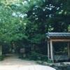 音羽山観音寺のお葉つきイチョウ(11月中旬)