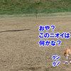 お初 訓練試験3