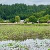長橋の池(新潟県柏崎)