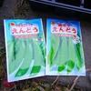 スナップエンドウ(絹さやも)とジャガイモの植え付けが完了!