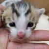先天的な病気である門脈シャントが、ペットショップで飼った犬猫に発見されたら?!