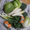 野菜がたくさん届いた。