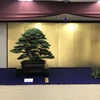 第43回日本盆栽作風展