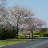 春の手賀沼サイクリングロード