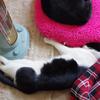 今日の黒猫モモ&白黒猫ナナの動画ー723