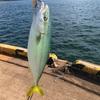 みんなの北海道釣り情報【函館市万代埠頭】幸に恵まれた函館!やはりフクラギも好調