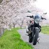 桜V7さん