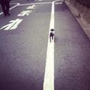 看板犬 とまと のブログ