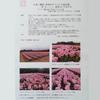 佐渡の春の観光名所、30万株のチューリップが見られます!