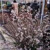 2019/01/26 「やまがた冬の桜まつり」/「フレッシュ名曲コンサート」