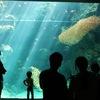 小名浜の水族館「アクアマリンふくしま」へ #東北魂
