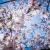お花見お話会in広島   サブタイトル「花も団子もお話も全部最高に味わっちゃおう会?」