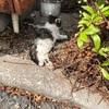 事故にあったネコ見つけた…