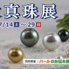 本日より「大真珠展」開催いたします。