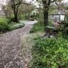 雨交じりの一日、桜舞う小道です。