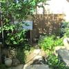 まぶしい朝の庭時間と、朝のオヤツ
