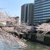 目黒川桜クルーズに行ってみた