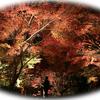46歩目:【紅葉と光と祭と】〇〇部長、感性をみがく亀岡ツアーズ①(〇〇に入るものは?)