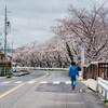桜 2020 Vol.2