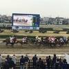 【人生初競馬】浦和競馬場へ!!!人情と唐揚げとお馬。競馬はデートにもおすすめ♡