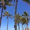 【ハワイにオススメのクレジットカード】JCBカードは必ず持って行こう♪