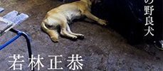 オードリー若林正恭のキューバ旅行記「表参道のセレブ犬とカバーニャ要塞の野良犬」感想